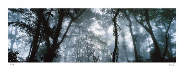 Selva Nublada