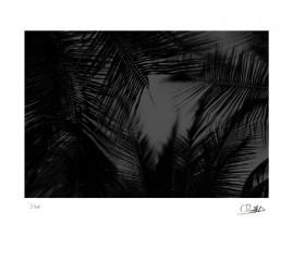 Noche tropical